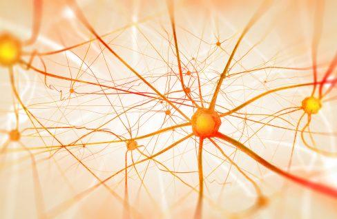 Neuronen im Gehirn