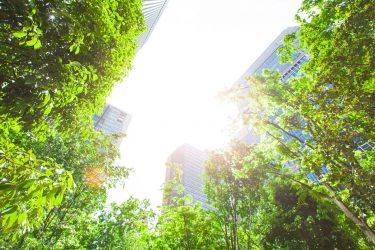 Blick auf Hochhäuser durch Bäume